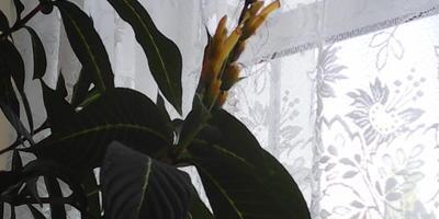 Что за комнатное растение у меня поселилось?