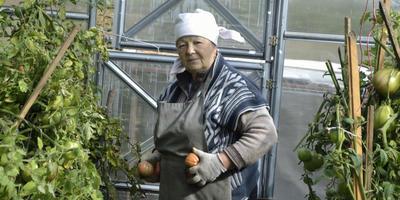 Выращивание помидоров это не простое, но увлекательное занятие