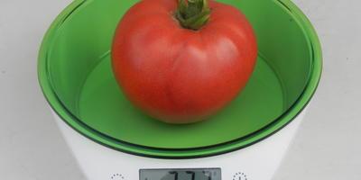 Калиброванный помидор