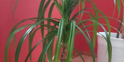 Подскажите, пожалуйста, как называются эти растения