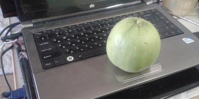 Как называется этот китайский сорт дыни размером с яблоко?