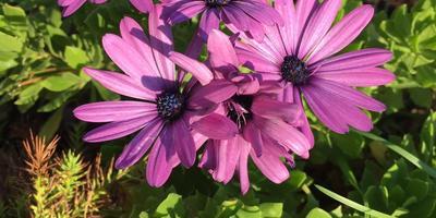 Подскажите, как называется цветок?