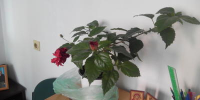 Помогите узнать название цветка