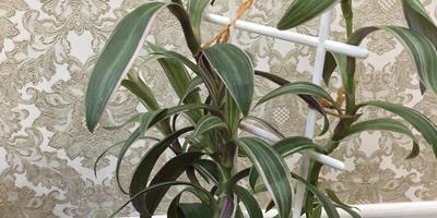 Подскажите, пожалуйста, как называется растение?