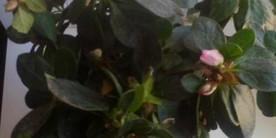 Подскажите, пожалуйста, что это за цветок? Как за ним ухаживать?