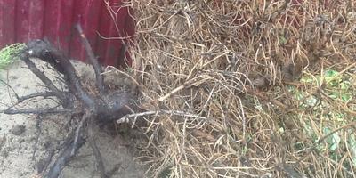 Помогите определить по фото, могла ли выжить ель? Можно ли наказать недобросовестных продавцов растений?