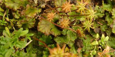 """Что за """"водоросли"""" покрыли нашу грядку после продолжительных дождей? И как с этим бороться?"""