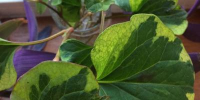 Что это за неизвестное растение?