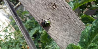 Подскажите название насекомого. Как с ним бороться?