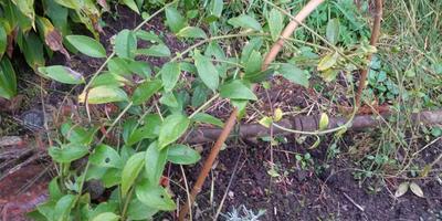 Помогите определить название этого растения!