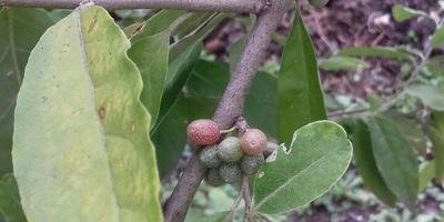 Помогите узнать растение