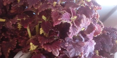 Помогите определить названия растений. Расскажите все о них