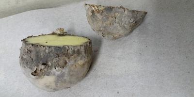Помогите определить заболевание картофеля