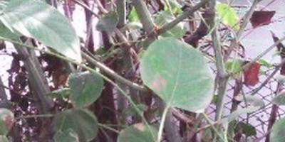 Подскажите название растения. Как от него избавиться?