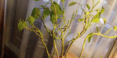 Как называется это растение и как его спасти?
