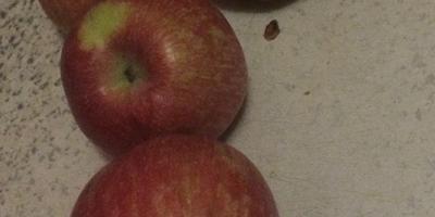 Подскажите, пожалуйста, какой это сорт яблок?