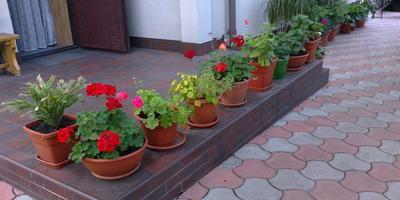 Мой зимний сад