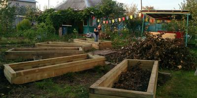 Помогите подобрать кустарники для изгороди