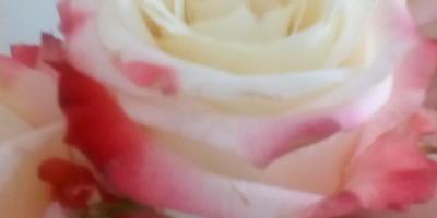 Настоящие ли эти розы?