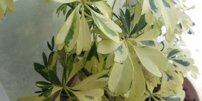 Как называется растение?