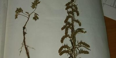 Помогите определить растения!