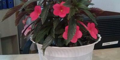Подскажите, как называется это растение?