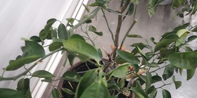Что это за растение и как ему помочь?