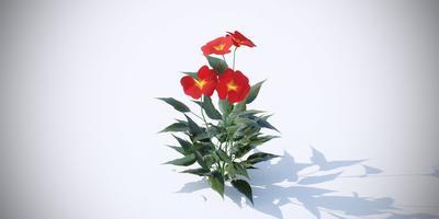 Подскажите, пожалуйста, что это за цветы?