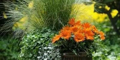 Из каких растений состоит данная композиция?