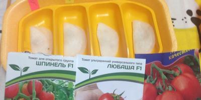 Начало выращивания томата Любаша F1