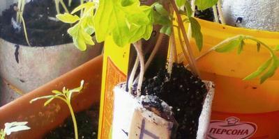Растюшки в улитках