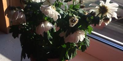 Что это за цветок и когда он начинает цвести?