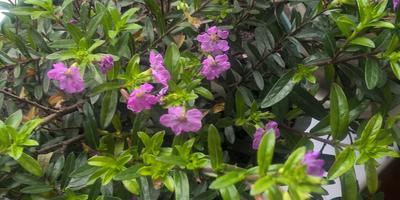Подскажите, пожалуйста, название этого цветка и как за ним ухаживать