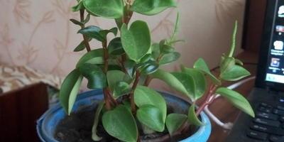 Подскажите, пожалуйста, как называются эти растения?