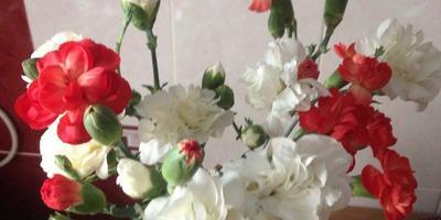 Подскажите название цветов