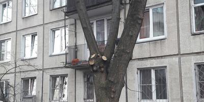 Подскажите название дерева