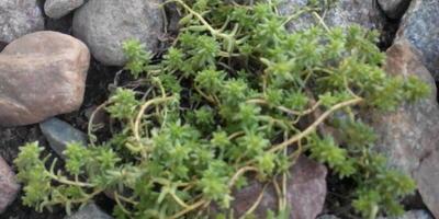 Помогите определить названия растений. Как за ними ухаживать?