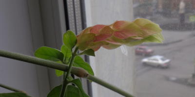 Скажите, что за растение?