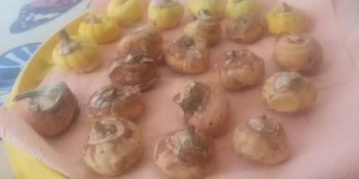 Нормальные ли луковицы гладиолуса?