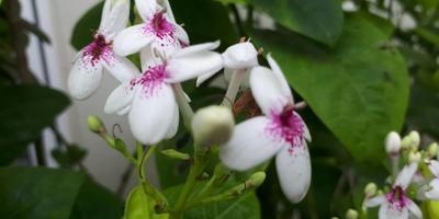 Пожалуйста, подскажите названия этих двух растений