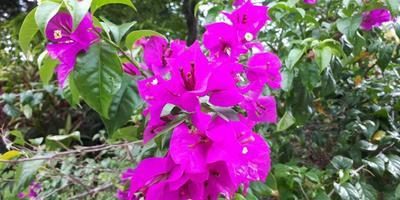 Можете подсказать названия этих растений?