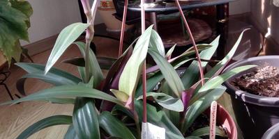Можно ли комнатные растения высадить в сад?