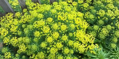 Пожалуйста, помогите определить растение!
