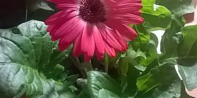 Что это за цветок? Как за ним ухаживать?