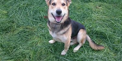 Невероятно добрый и всегда улыбающийся пёс))