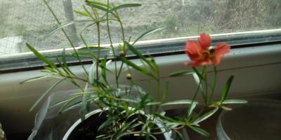 Что за растение? Как за ним ухаживать?