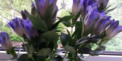 Как называется цветок и как за ним ухаживать?