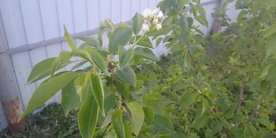 Можно ли спасти сосну и яблони? Помогите определить названия растений