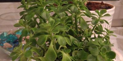 Как называется комнатное растение и как за ним ухаживать?