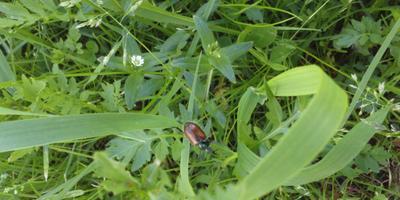 Что это за жуки и как с ними бороться?